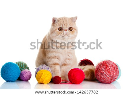 persian exotic cat isolated with balls of different colours - stock photo