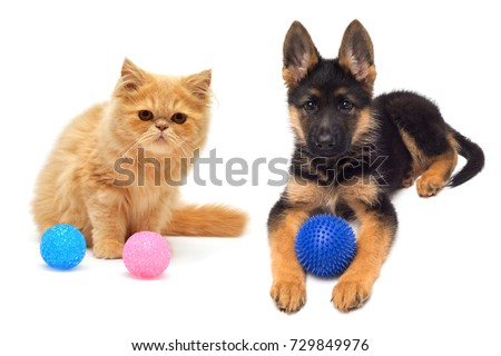 Persian kitten and German Shepherd puppy are played in balls close-up isolated on white background. Pets Dog and Cat