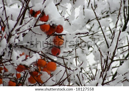 Persimmon with snow - stock photo