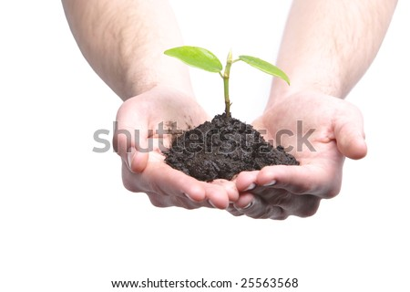 Person holding a sprout in the studio - stock photo