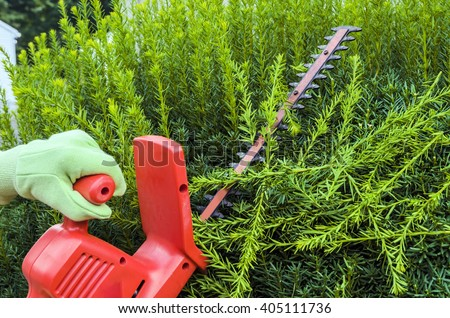 Person Using Electric Clippers to Trim Hedge - stock photo