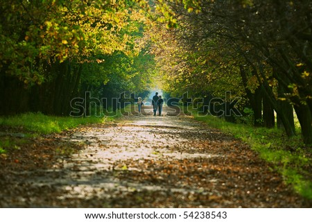 Person walking in the forest park - stock photo