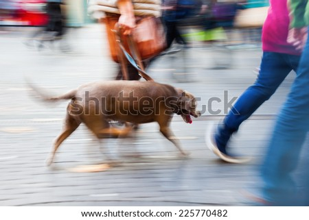 person walking the dog in the city in motion blur - stock photo