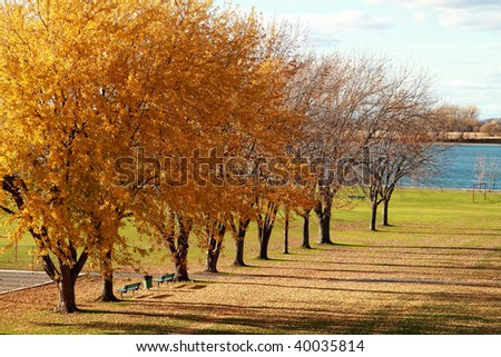 perspective of golden trees