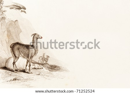 PERU, ALTIPLANO - CIRCA 1828 - Llamas and a condor.  This image is of an antique miniature drawing taken from the Illustrated Atlas of the World published circa 1828 - stock photo