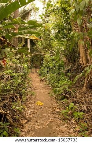 Peruvian Amazon jungle walk - stock photo