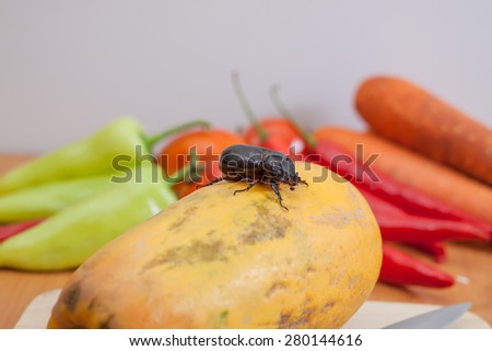 Pests eat vegetables - stock photo