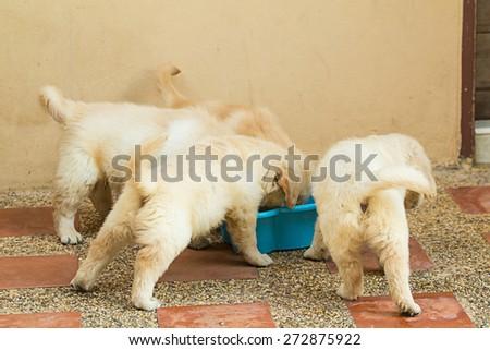 Pet - stock photo
