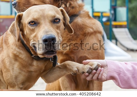 pet animals, brown dog playing