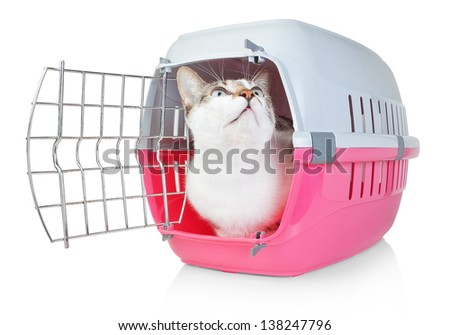 Pet cat in a cage for transport with door open. He looks up. - stock photo