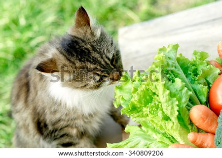 Pet - cat knows what is healthy food - stock photo