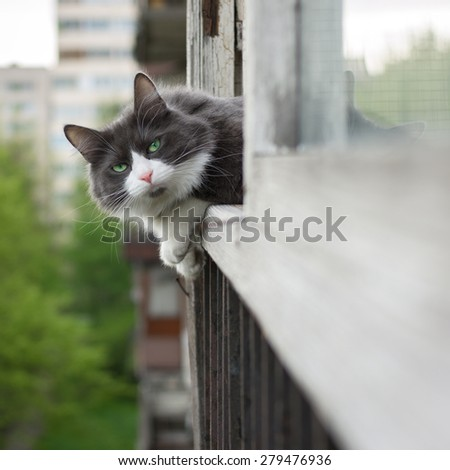Pet cat looks out the window - stock photo