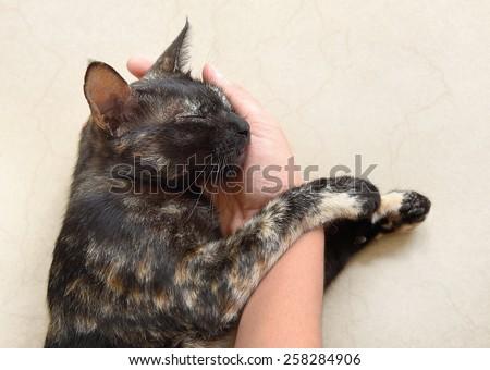 cat biting humans hand stock photo 61986736  shutterstock