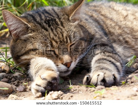 Pet cat sleeping in the garden - stock photo