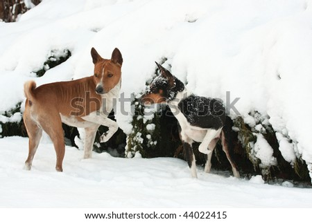 Pet dogs enjoying the snow and playing under a covered conifer