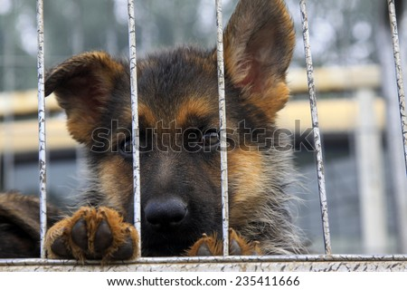 Pet dogs in cage, closeup of photo - stock photo