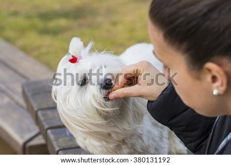 Pet eating. - stock photo