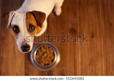 Pet eating food. Dog eats food from bowl