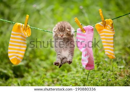 pet kitten - stock photo