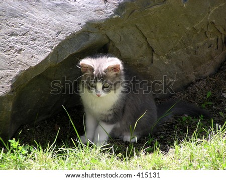 pet kitten focuses intently from shadow of sheltering rock
