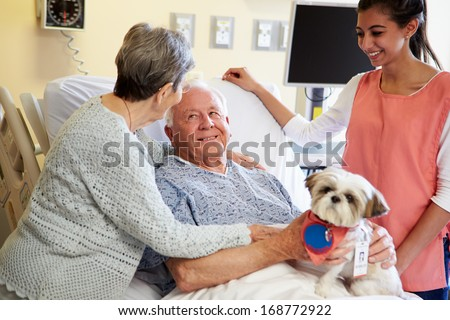 Pet Therapy Dog Visiting Senior Male Patient In Hospital - stock photo