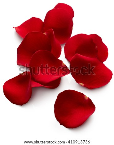 Petals of red rose isolated on white background - stock photo