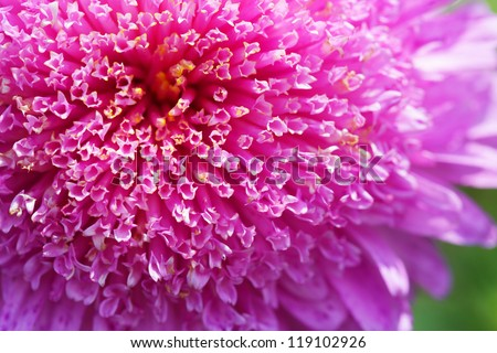 petals of the red flower close-up - stock photo
