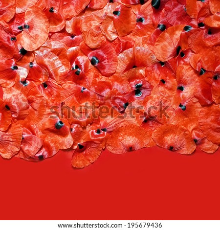 petals poppy background - stock photo