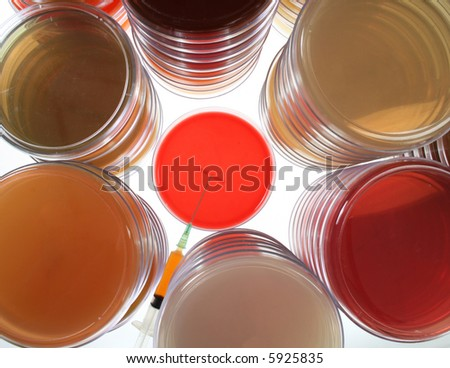 Petri dishes with syringe with sample - stock photo