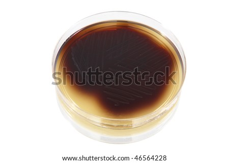 Petri plate with bacteria Enterococcus Faecalis, isolated over white background - stock photo