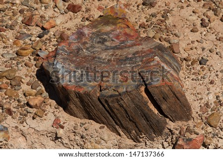 Petrified Tree showing colorful mineral deposits that have replaced the wood over millions of years in Petrified Forest National Park. - stock photo
