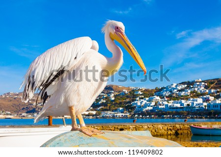 Petros, the famous pelican of Mykonos island standing on a boat by sea and posing, Mykonos island Greece Cyclades - stock photo