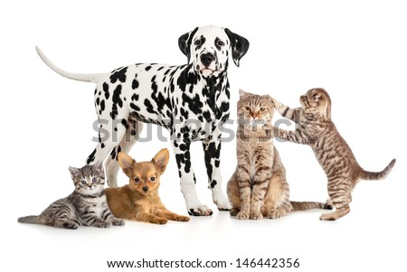 pets animals group collage for veterinary or petshop isolated - stock photo