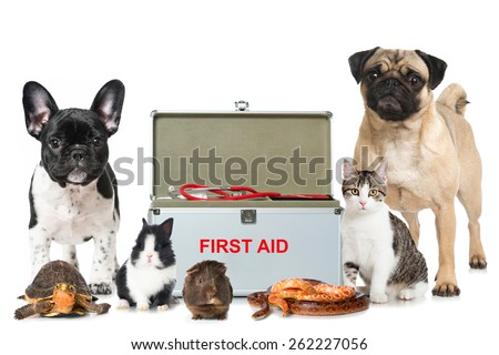 Pets first aid - stock photo