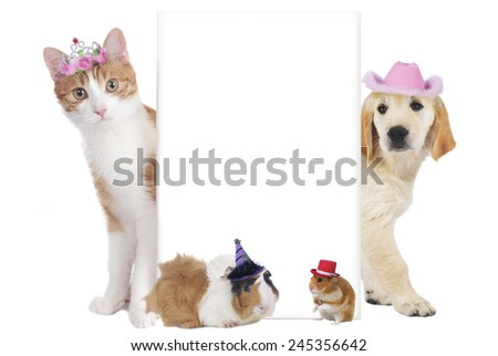 Pets with carnival hats