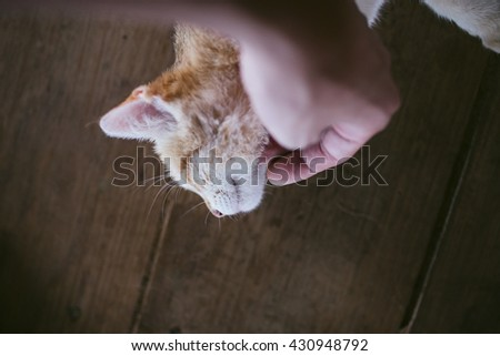 Petting a white yellow cat. Happy cat is pleased with hand stroking. - stock photo
