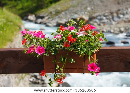 Petunia flower pot hanging on the river bridge near the mountain river, Alps, Italy