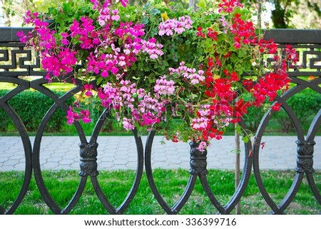 Petunia Flowers In Hanging Flower Pot on metal fence, city landscaping - stock photo
