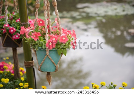 Petunias in flowerpot hanging over pond background - stock photo
