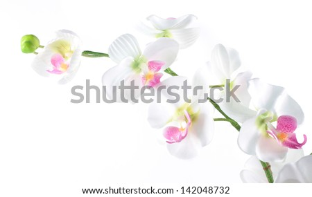 phalaenopsis orchid isolated on a white background - stock photo
