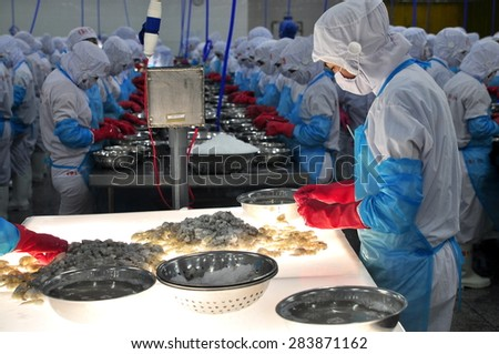 PHAN RANG, VIETNAM - DECEMBER 29, 2014: A worker is checking the color processed shrimps for exporting in a seafood factory in Vietnam