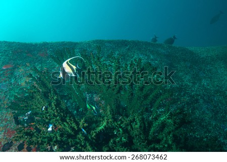 Phang Nga, THAILAND - FEB 26: Coral and fish underwater in Similan Islands, Thailand on February 26, 2015.