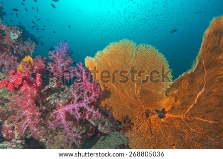 Phang Nga, THAILAND - FEB 27: Coral and fish underwater in Similan Islands, Thailand on February 27, 2015.  - stock photo