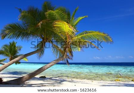 PHENOMENAL BEACH WITH PALM TREES IN INDIAN OCEAN, MALDIVE ISLAND, FILITEYO - stock photo