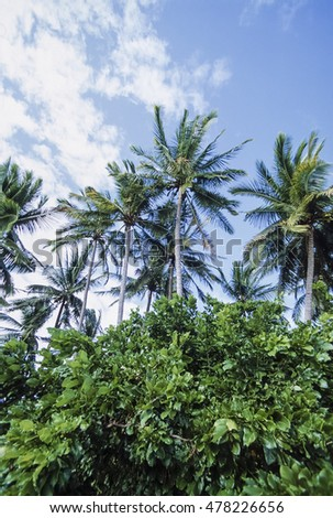 PHILIPPINES, Dakak Island, coconut palm trees and tropical vegetation