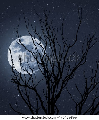 Photo composition with full moon, part of a naked tree and stars that can be used for halloween