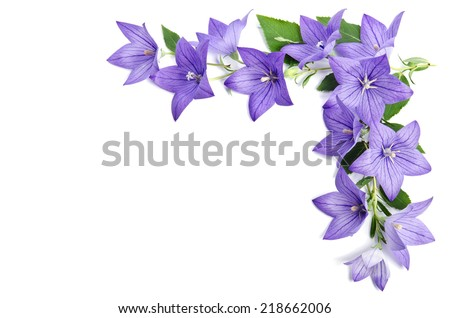 Photo corner made of Bellflowers isolated over white background - stock photo