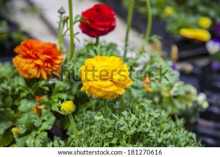 Photo flower outdoors - stock photo