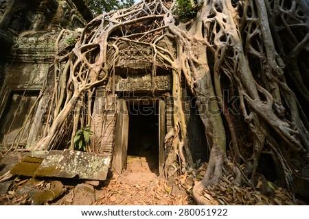 Photo from Angkor Wat world heritage site, Big Tree at Ta Prohm Temple, Angkor Wat, Cambodia - stock photo