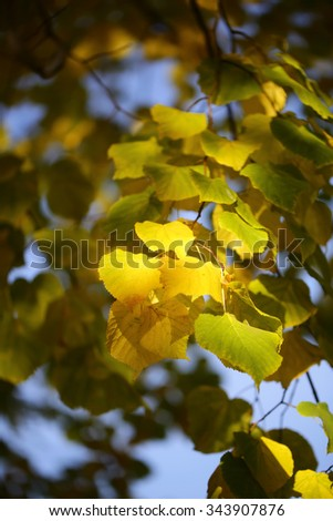 Photo low angle view of beautiful sun-illuminated autumn green yellow heavy foliage on branches of golden-leaved trees over blurred bright blue sky background, vertical picture - stock photo
